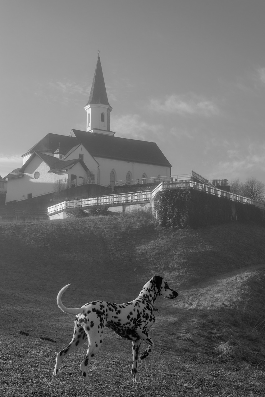 church dog dalmatians free photo