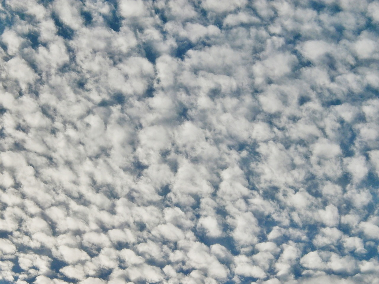 cirrocumulus cloud sky free picture