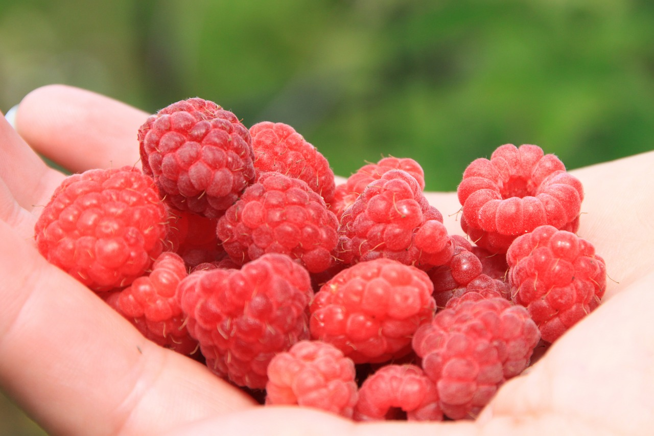 close-up,fresh,girl,hands,natural,raspberry,red,sweet,food,drink,fruit,free pictures, free photos, free images, royalty free, free illustrations, public domain