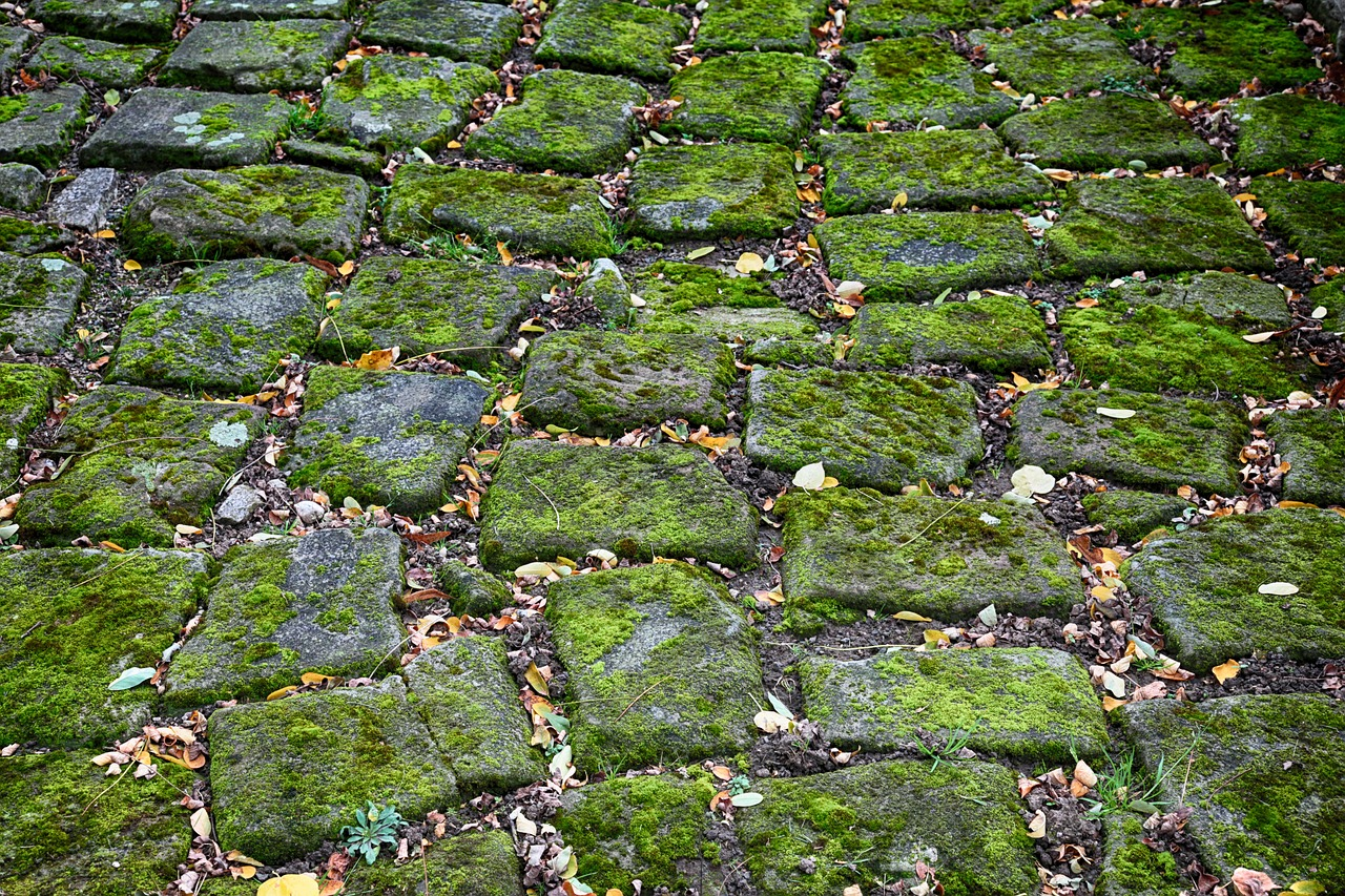 Download free moss patch installation instructions