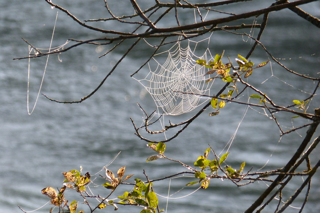 cobweb cobwebs tender free photo