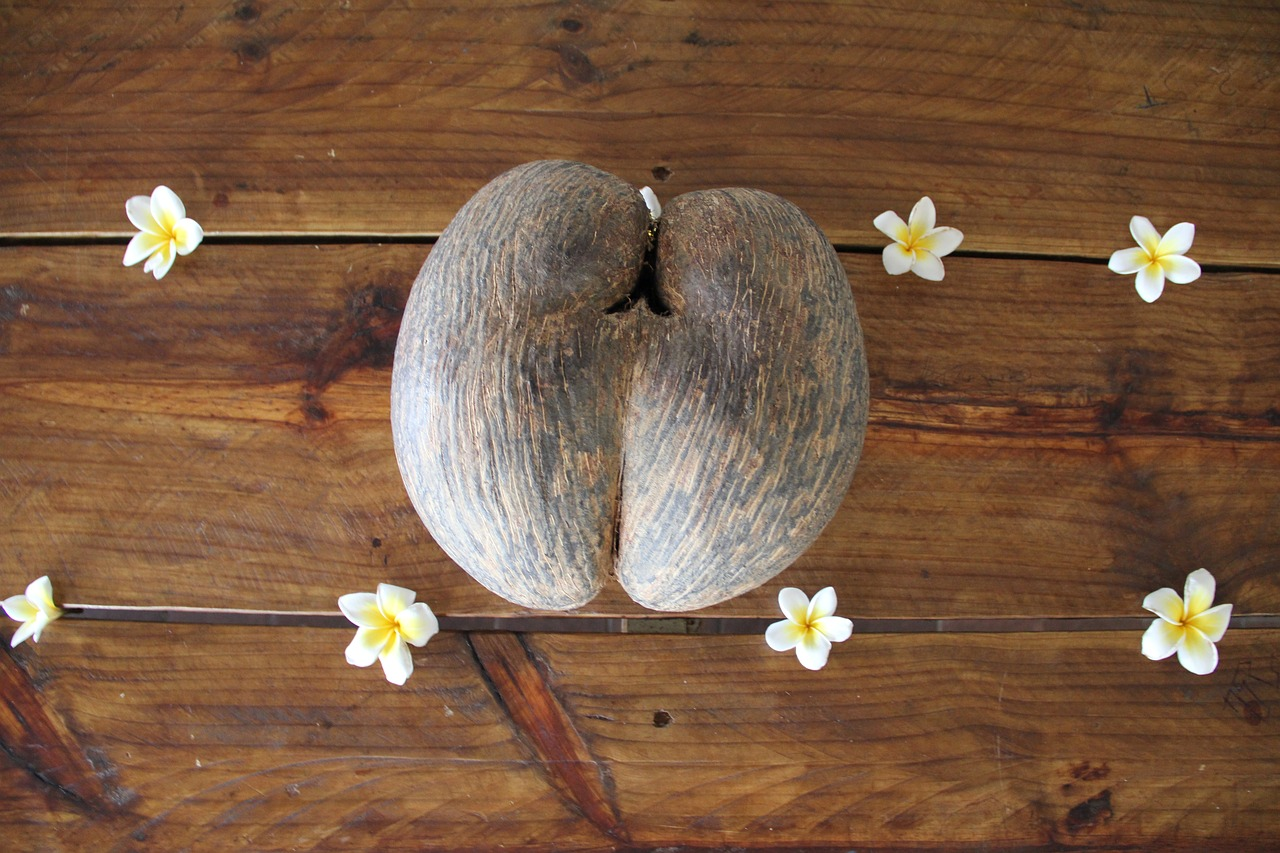 Coco der mer seed, Double nut
