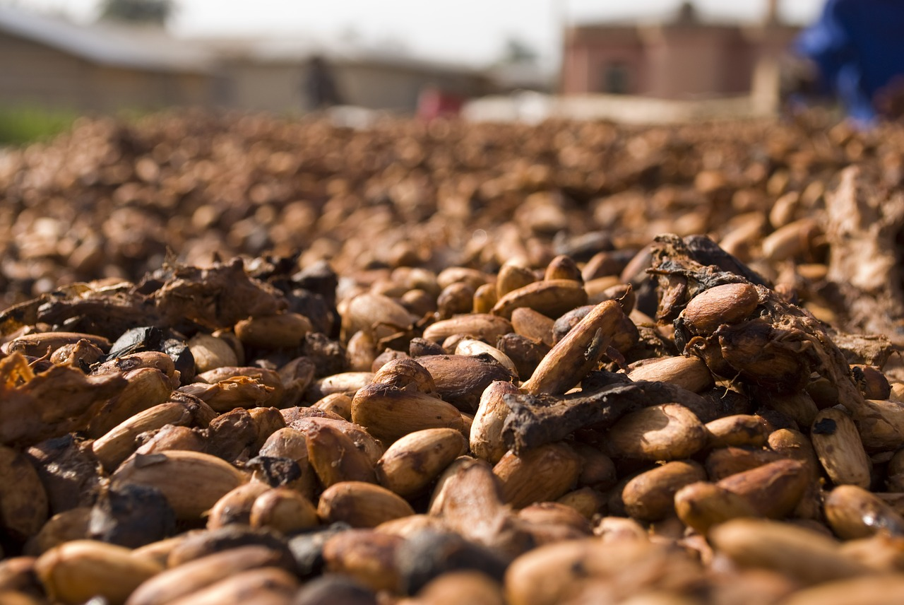 cocoa beans food free photo