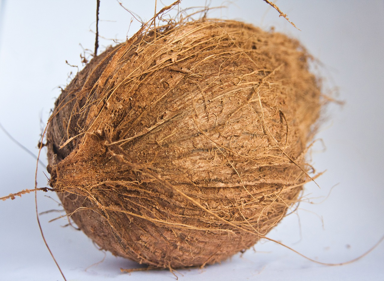 coconut dried food free picture