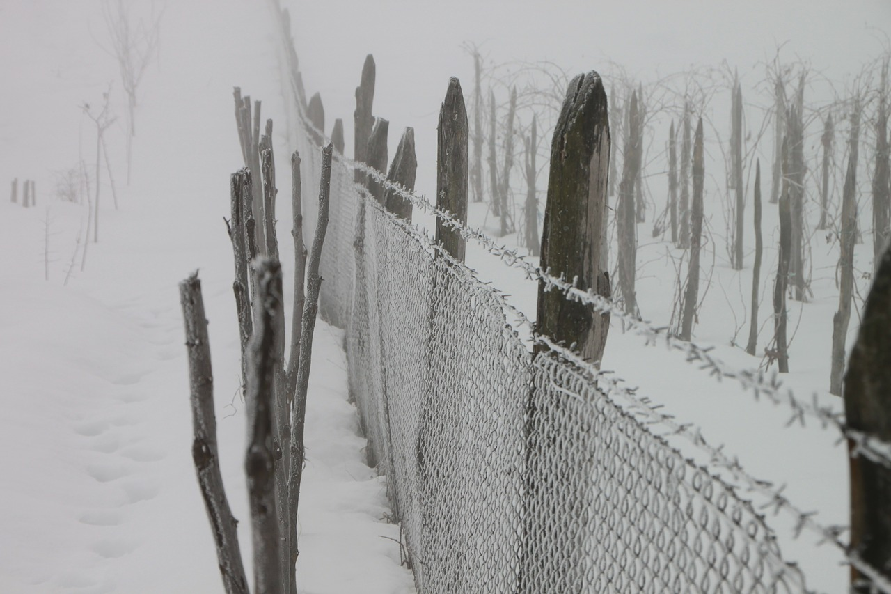 cold fence frozen free photo