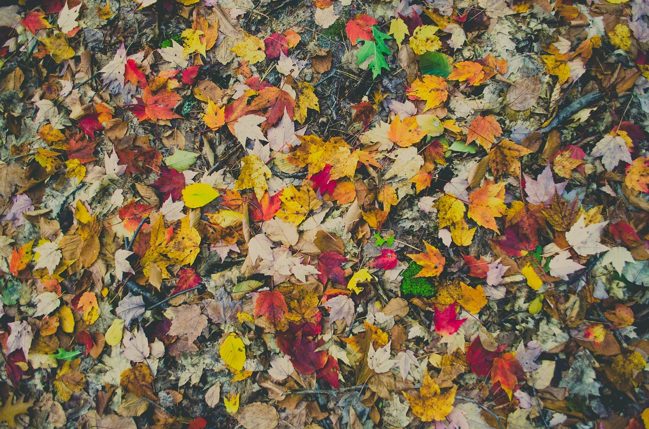colorful leaf autumn free picture