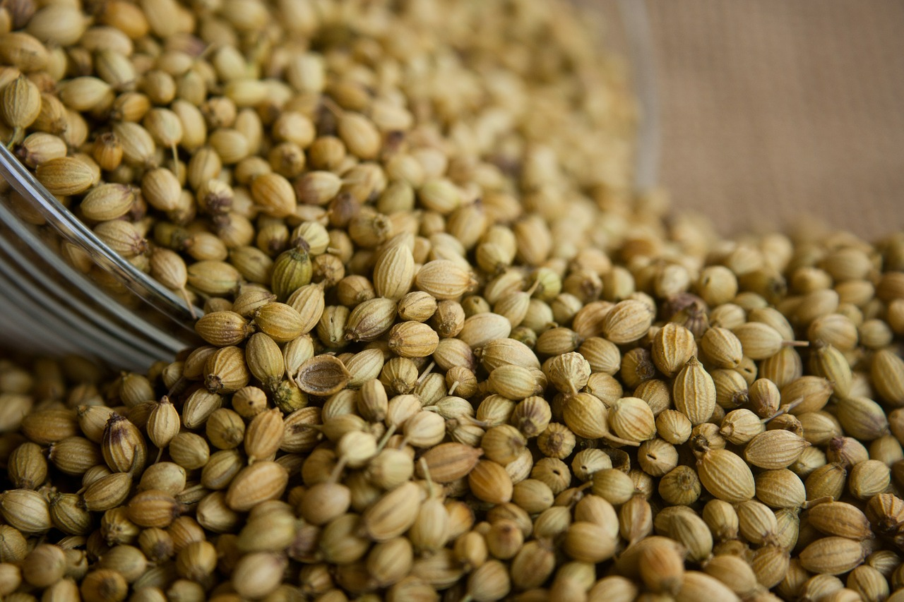 coriander seeds food free picture