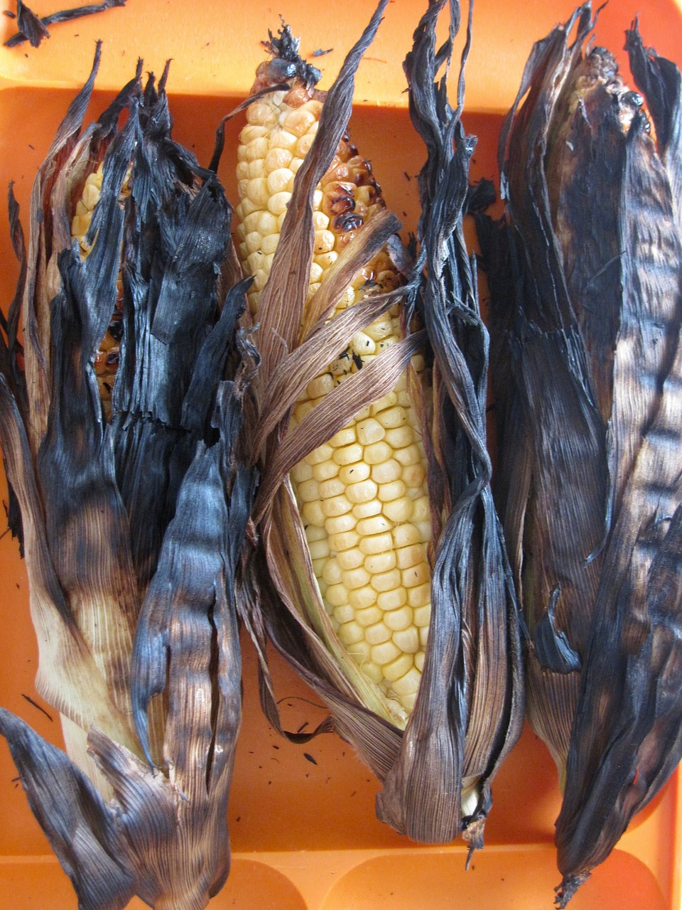 corn kernels burnt free photo
