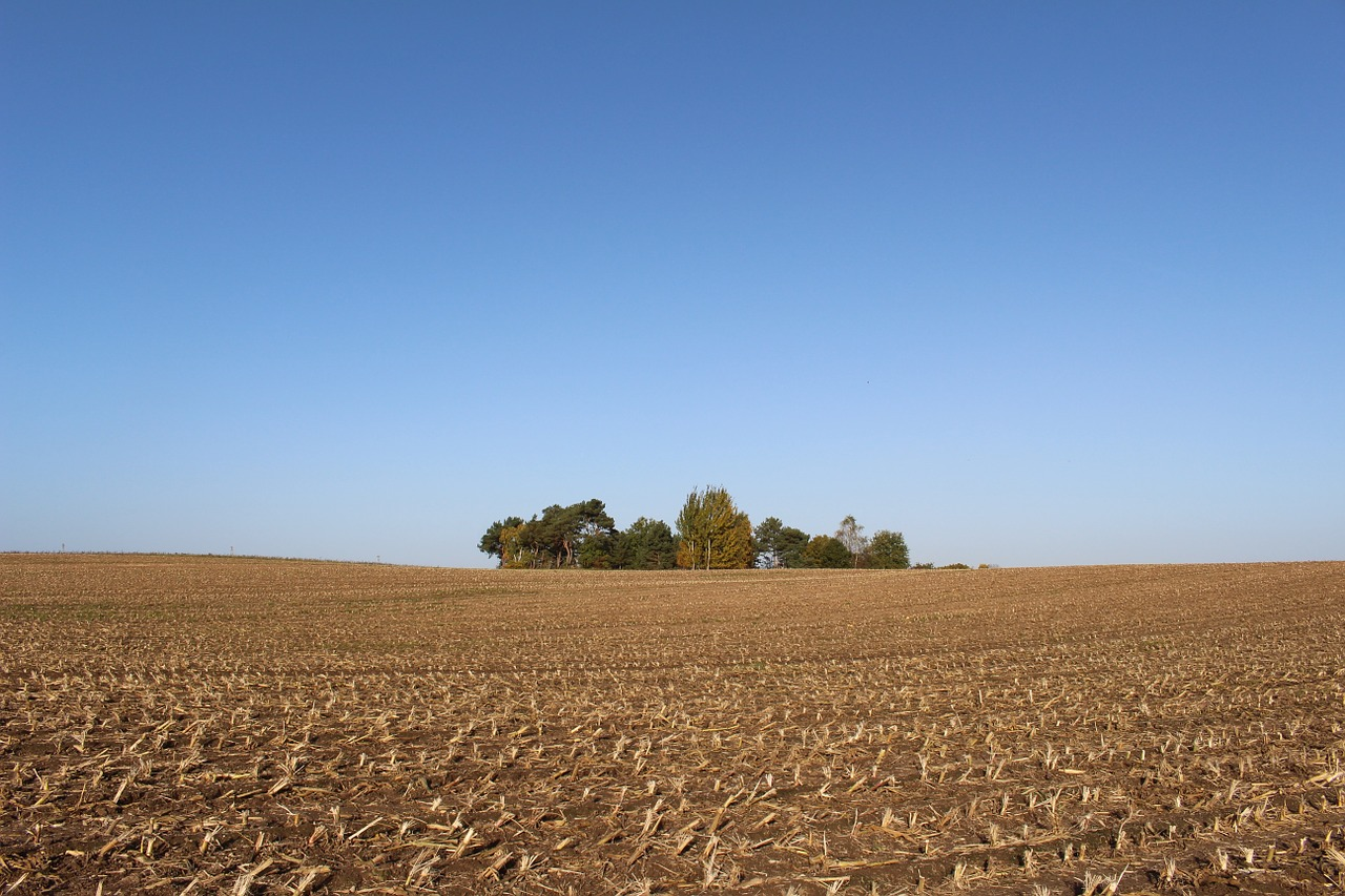 cornfield,harvest,autumn,forest,waldoase,golden autumn,field,agriculture,cultivation,nature,sun,arable,glean,rural,sky,free pictures, free photos, free images, royalty free, free illustrations, public domain