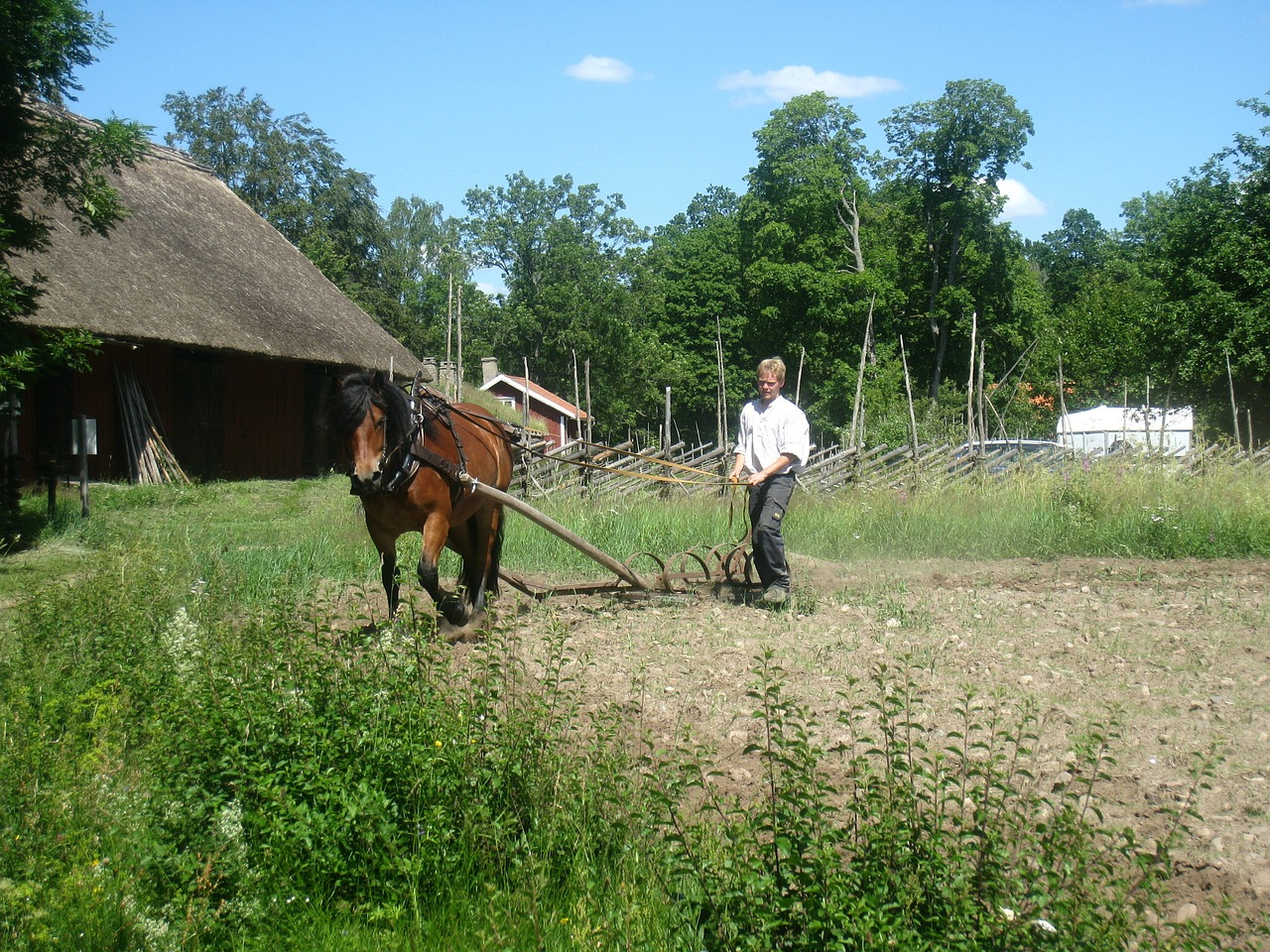 countryside horse man free photo