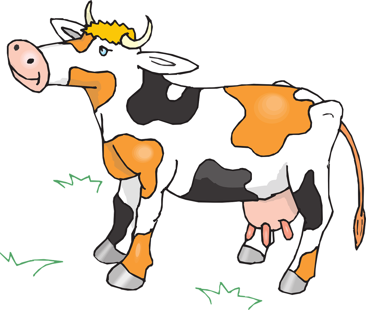 cow,cattle,livestock,farm,animal,beef,dairy,milk,udder,black,white,orange,mammal,herd,free vector graphics,free pictures, free photos, free images, royalty free, free illustrations, public domain