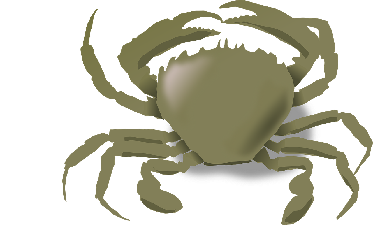 crab,claws,sea,animal,shellfish,seafood,beach,free vector graphics,free pictures, free photos, free images, royalty free, free illustrations, public domain