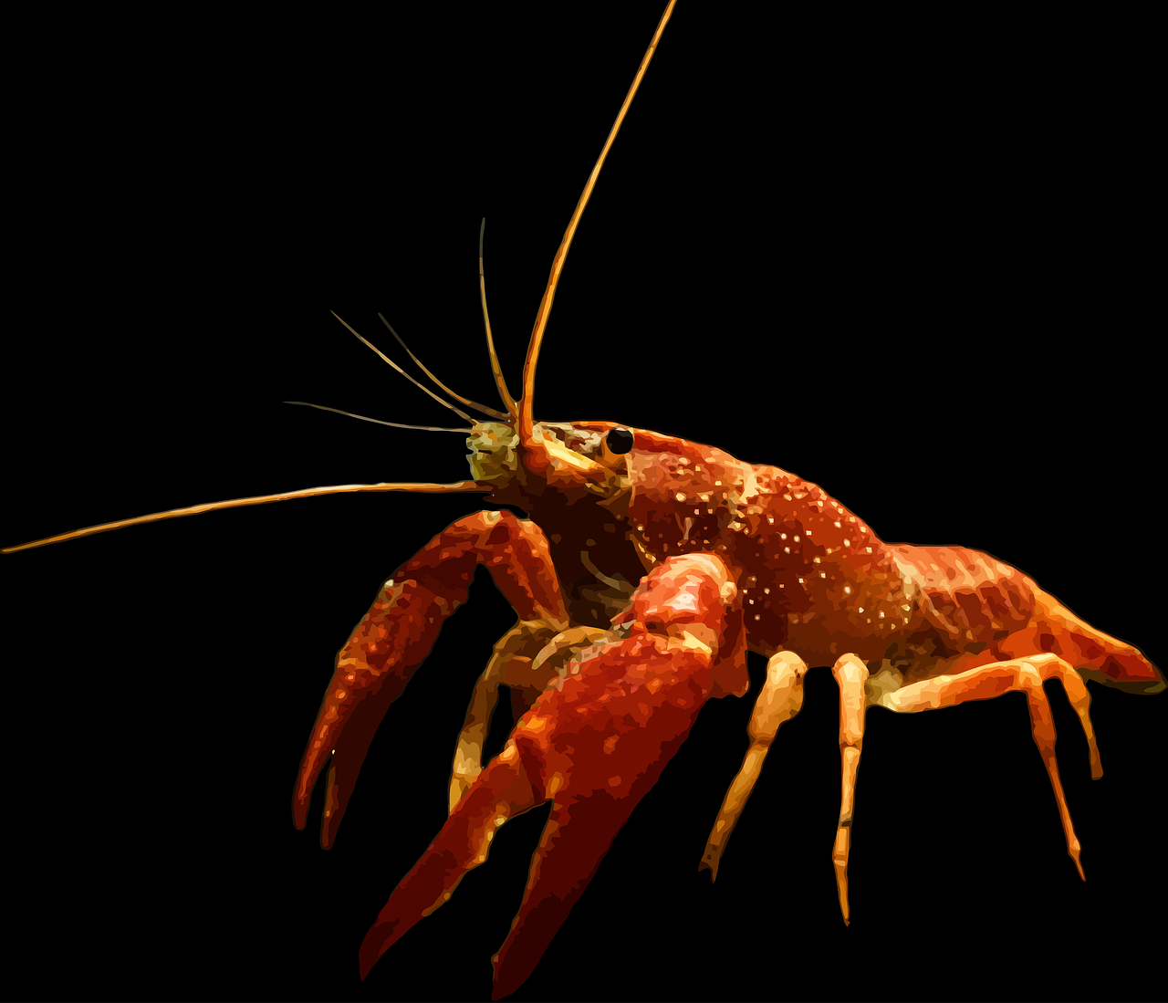 crayfish nature macro free photo