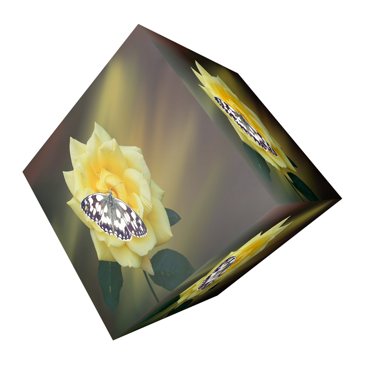 cube flower blossom free photo