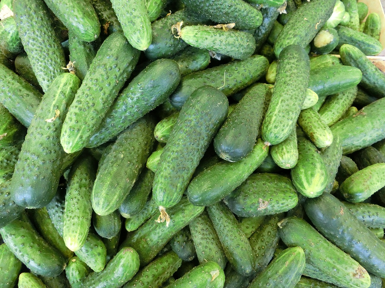 cucumbers vegetables healthy free photo