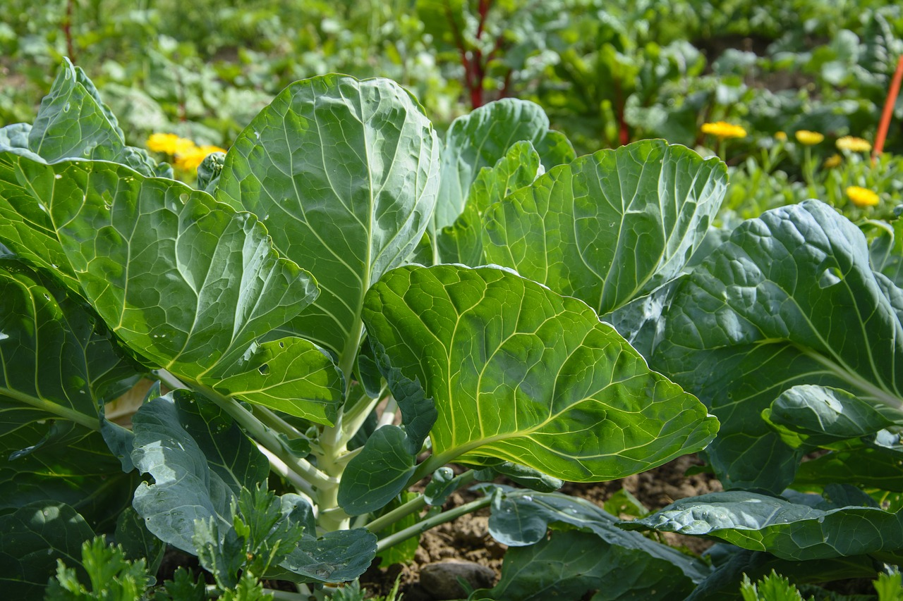 cultivation  vegetable garden  bio free photo