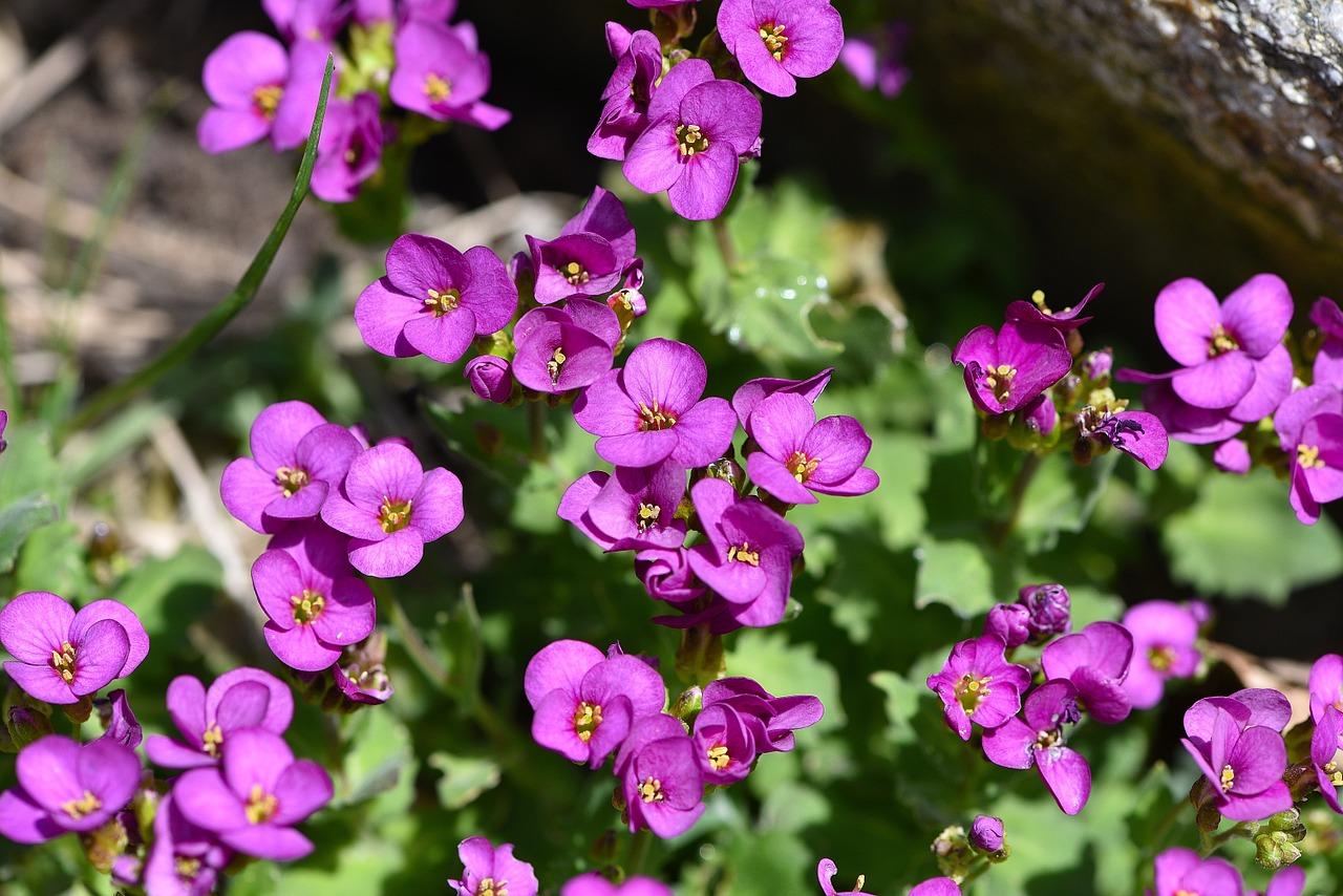 Cushion Flowerspinkflowersnaturegarden Free Photo From Needpix