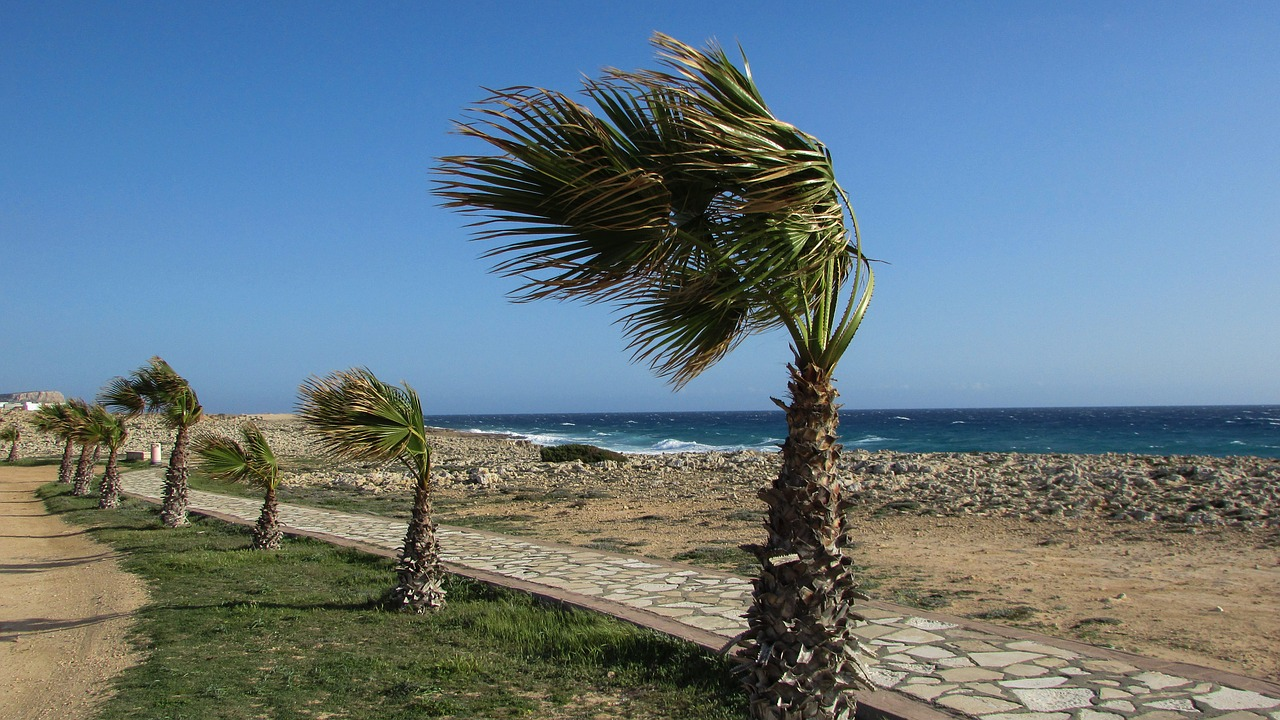 cyprus,ayia napa,coastal path,palms,wind,free pictures, free photos, free images, royalty free, free illustrations, public domain