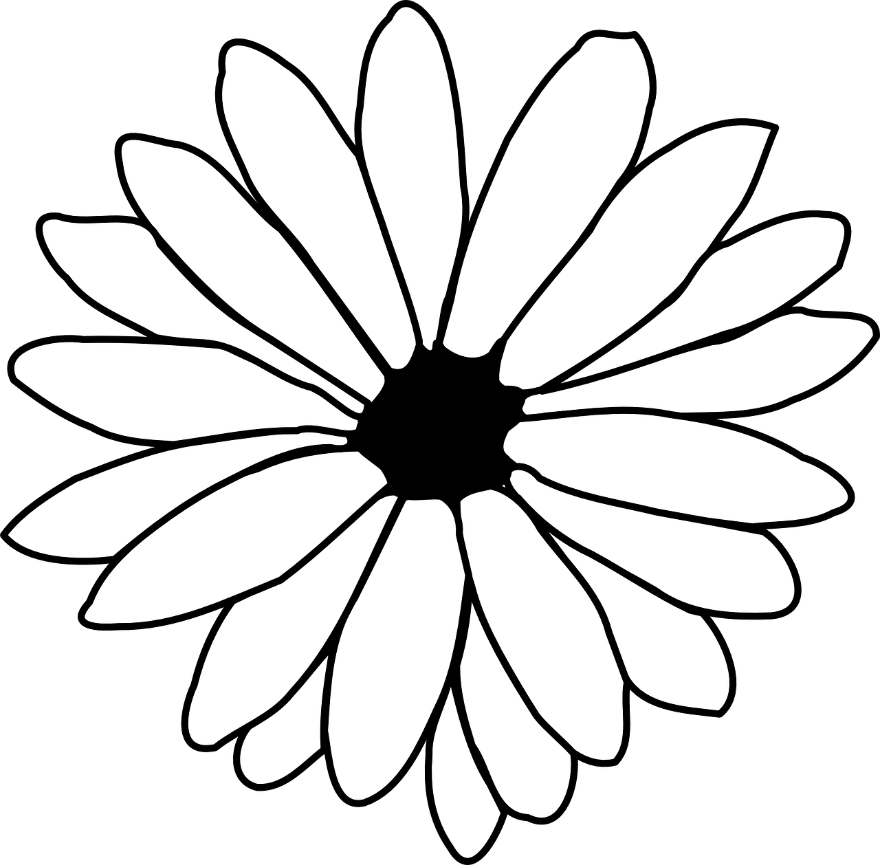 daisy outline black and white free photo