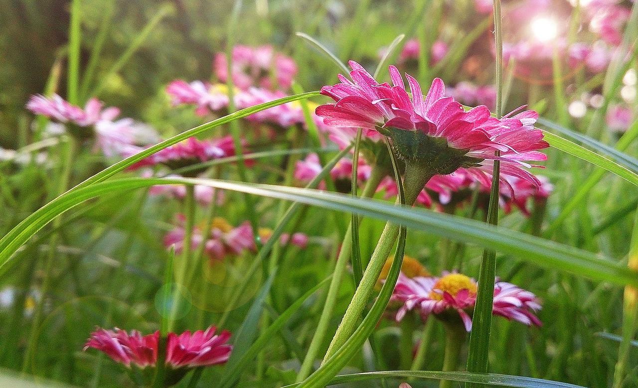 Daisyflowerssummersunny daybright free photo from needpix daisy flowers summer izmirmasajfo