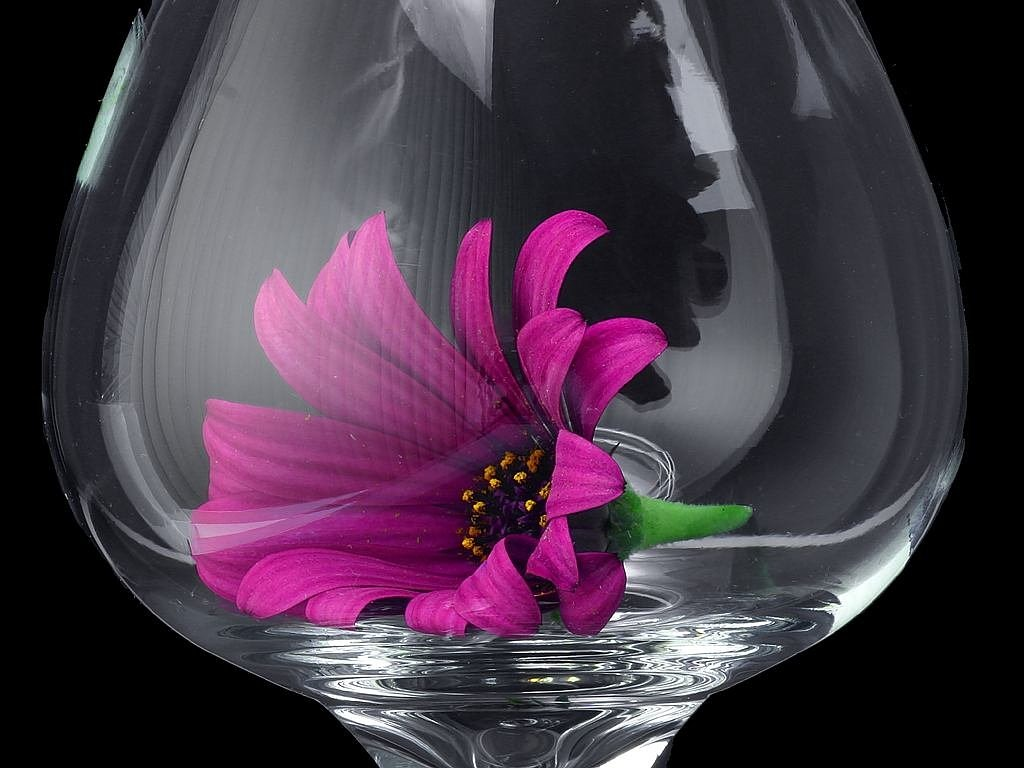 daisy glass flower free photo