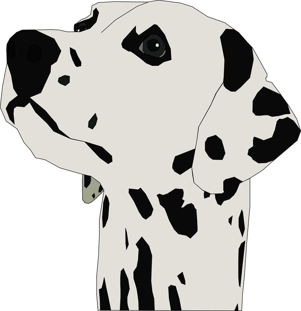 dalmatian dog breed free photo
