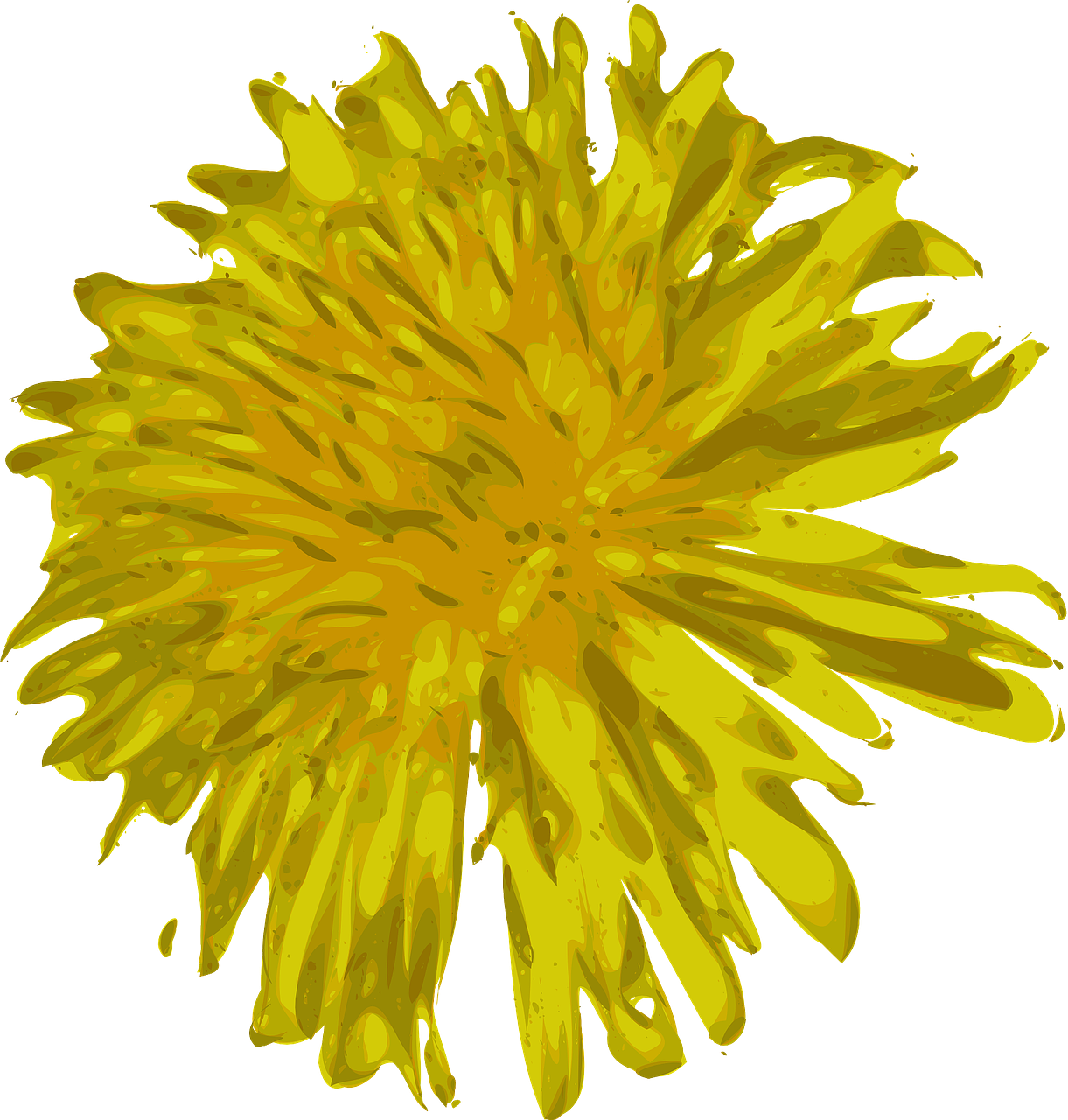 dandelion flower beautiful free photo