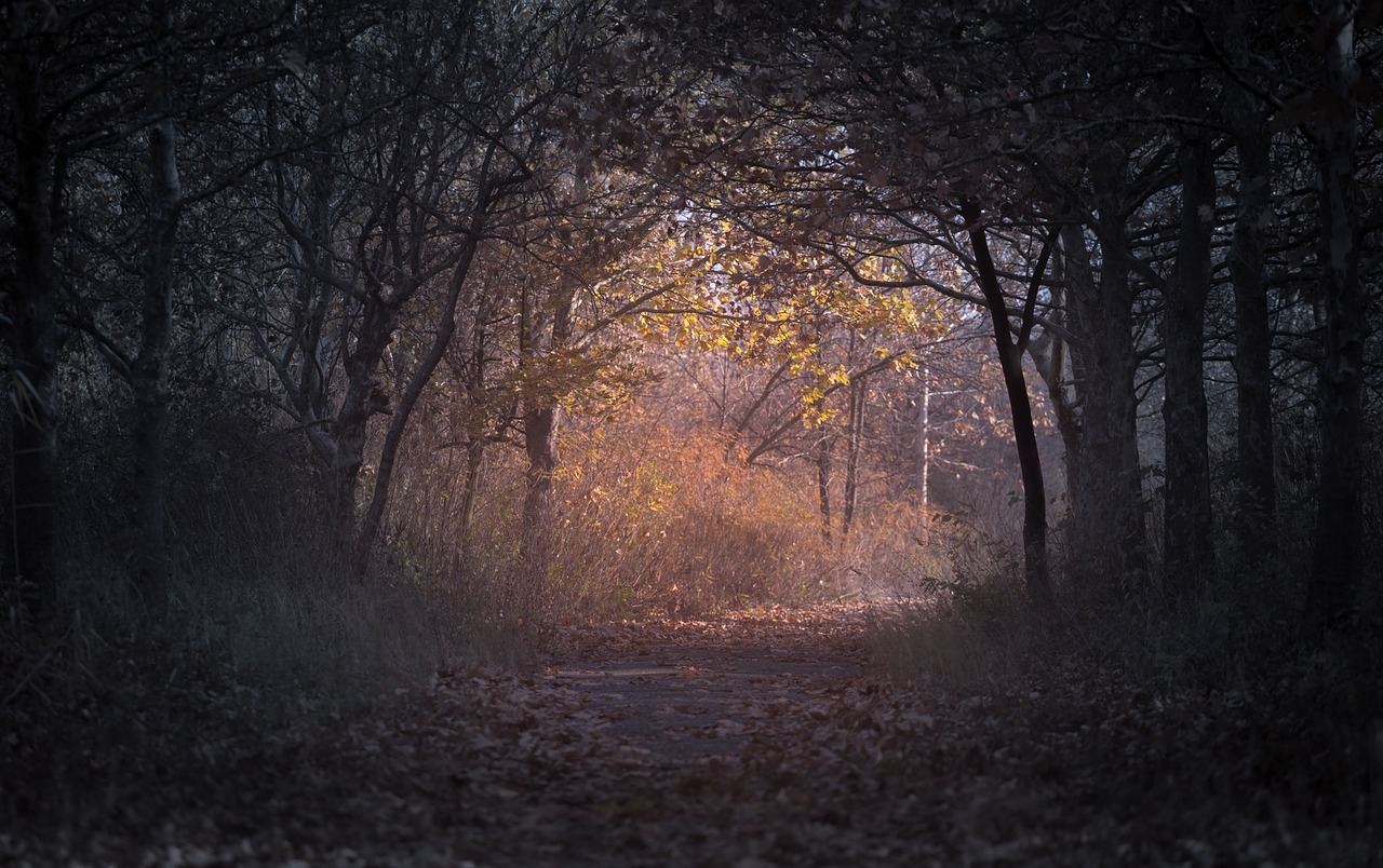 dark,trees,plant,nature,path,leaf,fall,autumn,free pictures, free photos, free images, royalty free, free illustrations, public domain