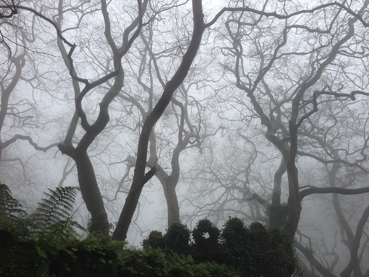 dark mist nature free picture
