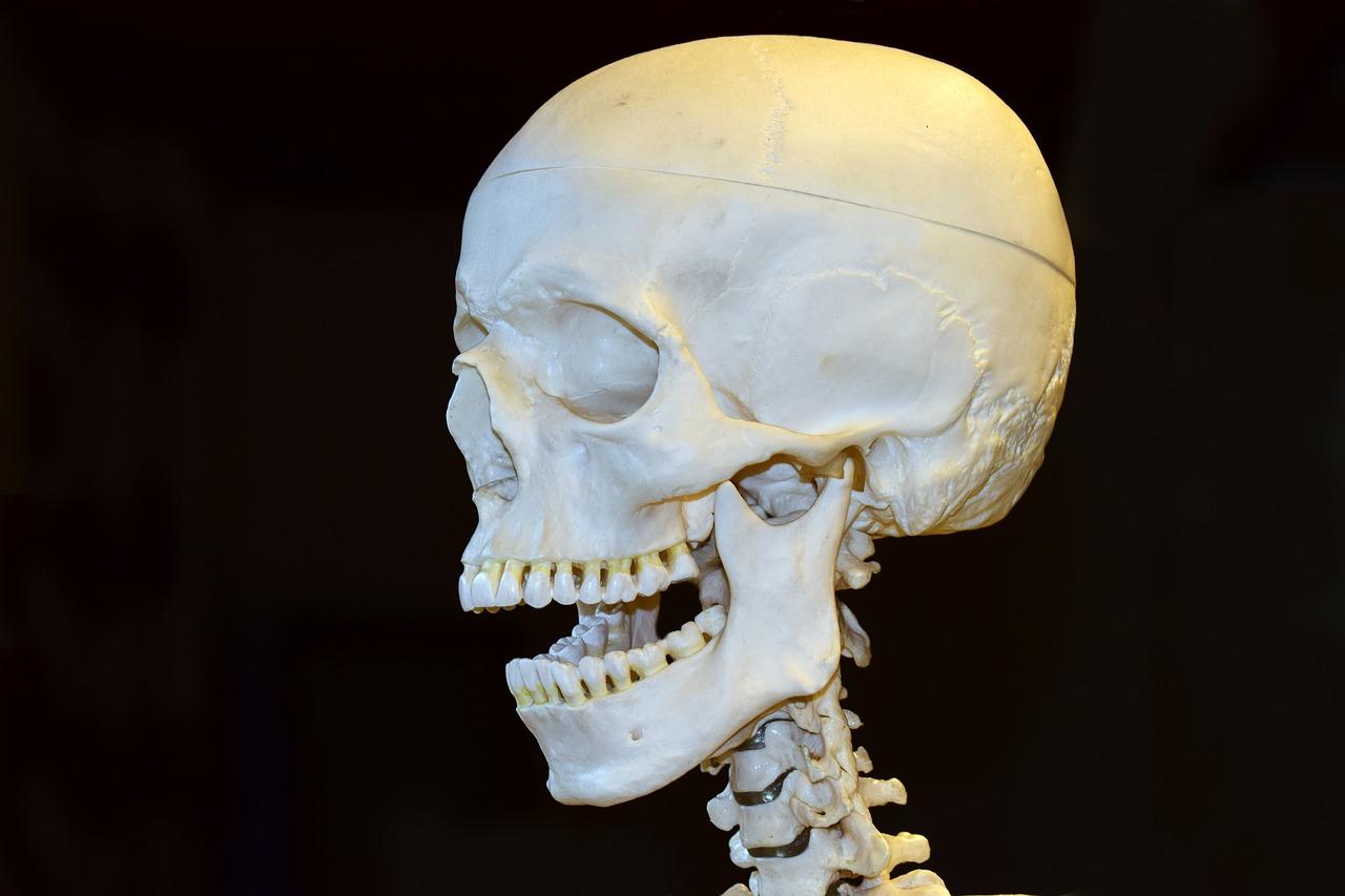 Death,skull,skeleton,bone,horror - free photo from needpix.com