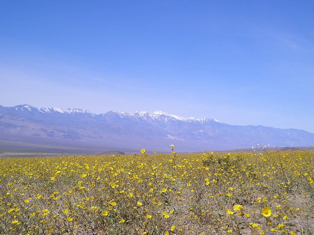 death valley california floral free photo