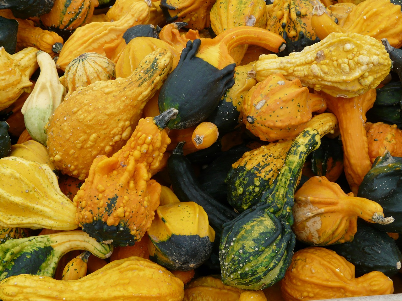 decorative squashes pumpkin pumpkin art free photo