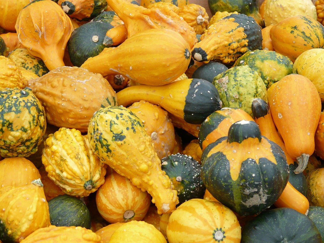 decorative squashes pumpkins yellow free photo