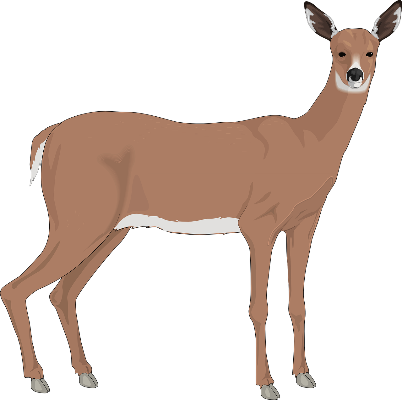 deer,animal,mammal,wild,nature,wildlife,collection,doe,stag,beast,female,meadow,herd,environment,natural,prairie,free vector graphics,free pictures, free photos, free images, royalty free, free illustrations, public domain