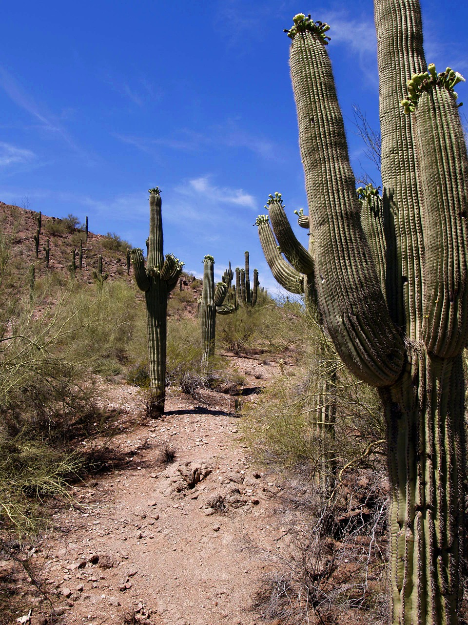 desert cactus landscape free photo