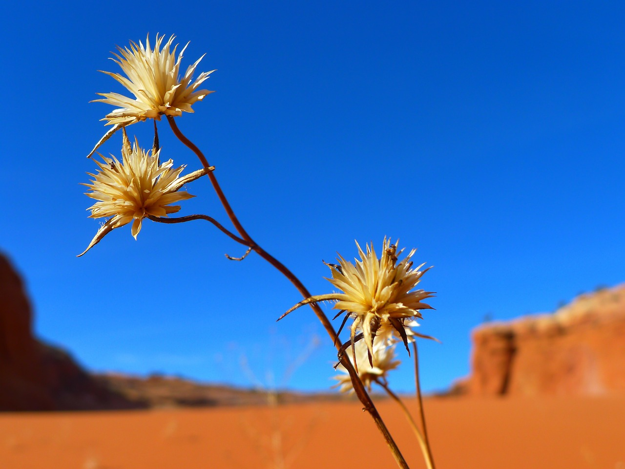 desert flower landscape free photo