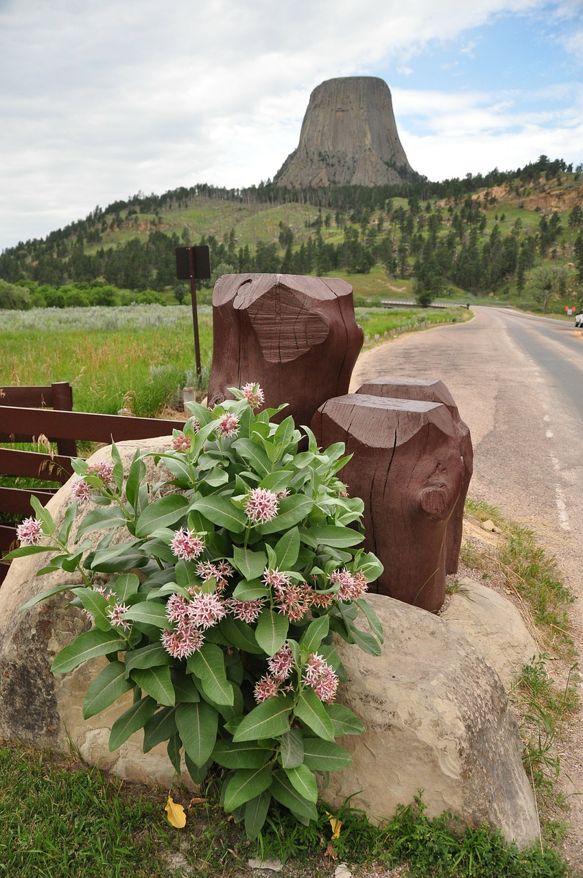 devils tower mountain mountains free photo