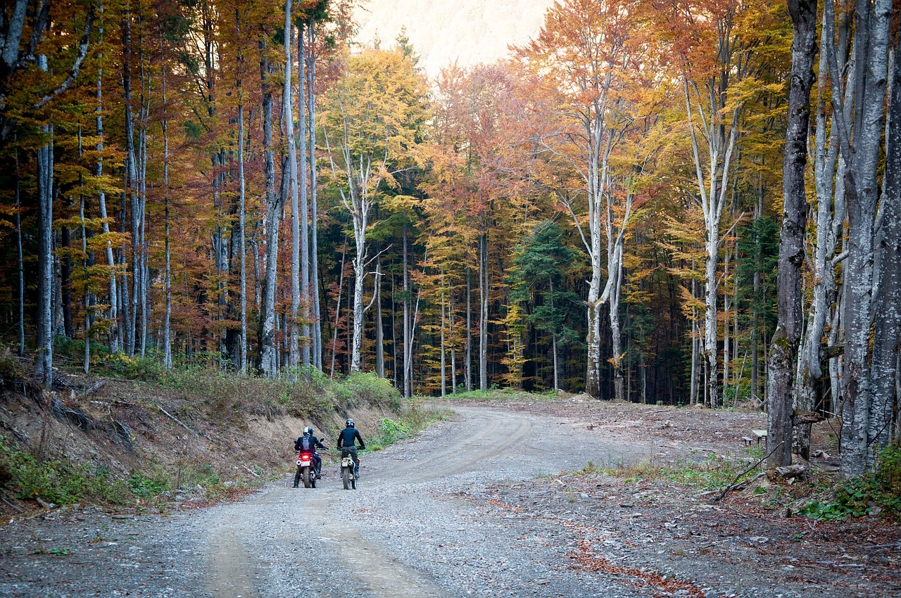 dirt bikes,motorbikes,bikers,road,trees,forest,woods,autumn,fall,free pictures, free photos, free images, royalty free, free illustrations, public domain