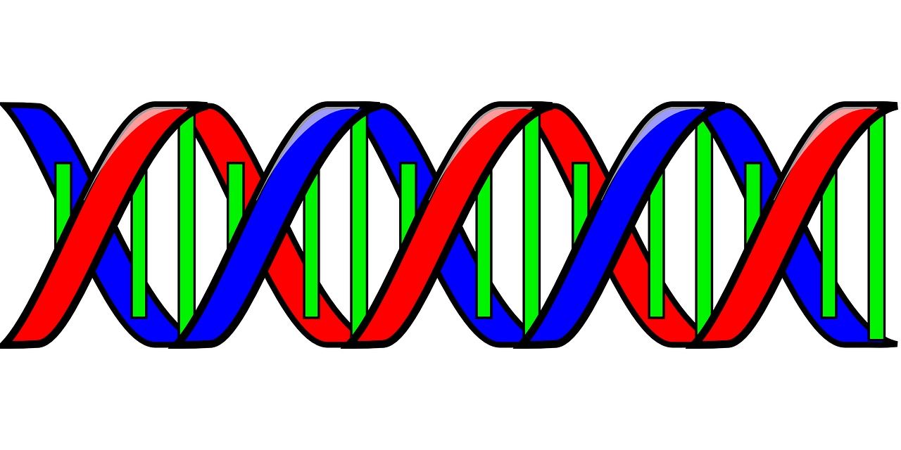 dna genetic code double helix free photo