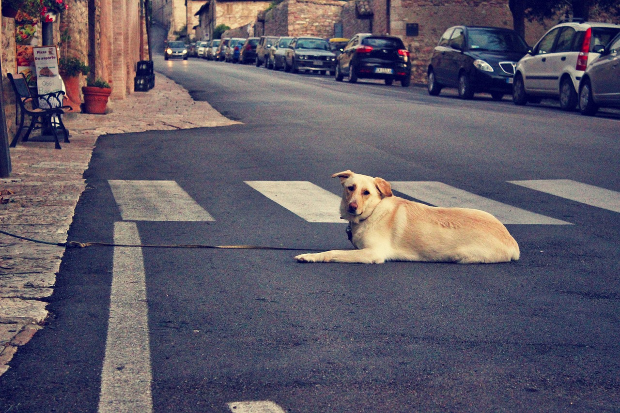 dog street assisi free photo