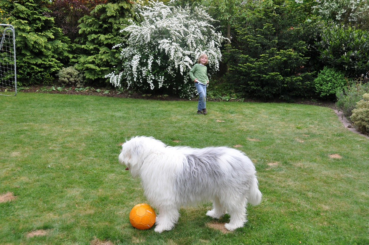 dog ball young dog free photo
