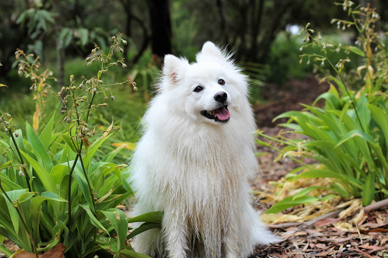 dog puppy spitz free photo
