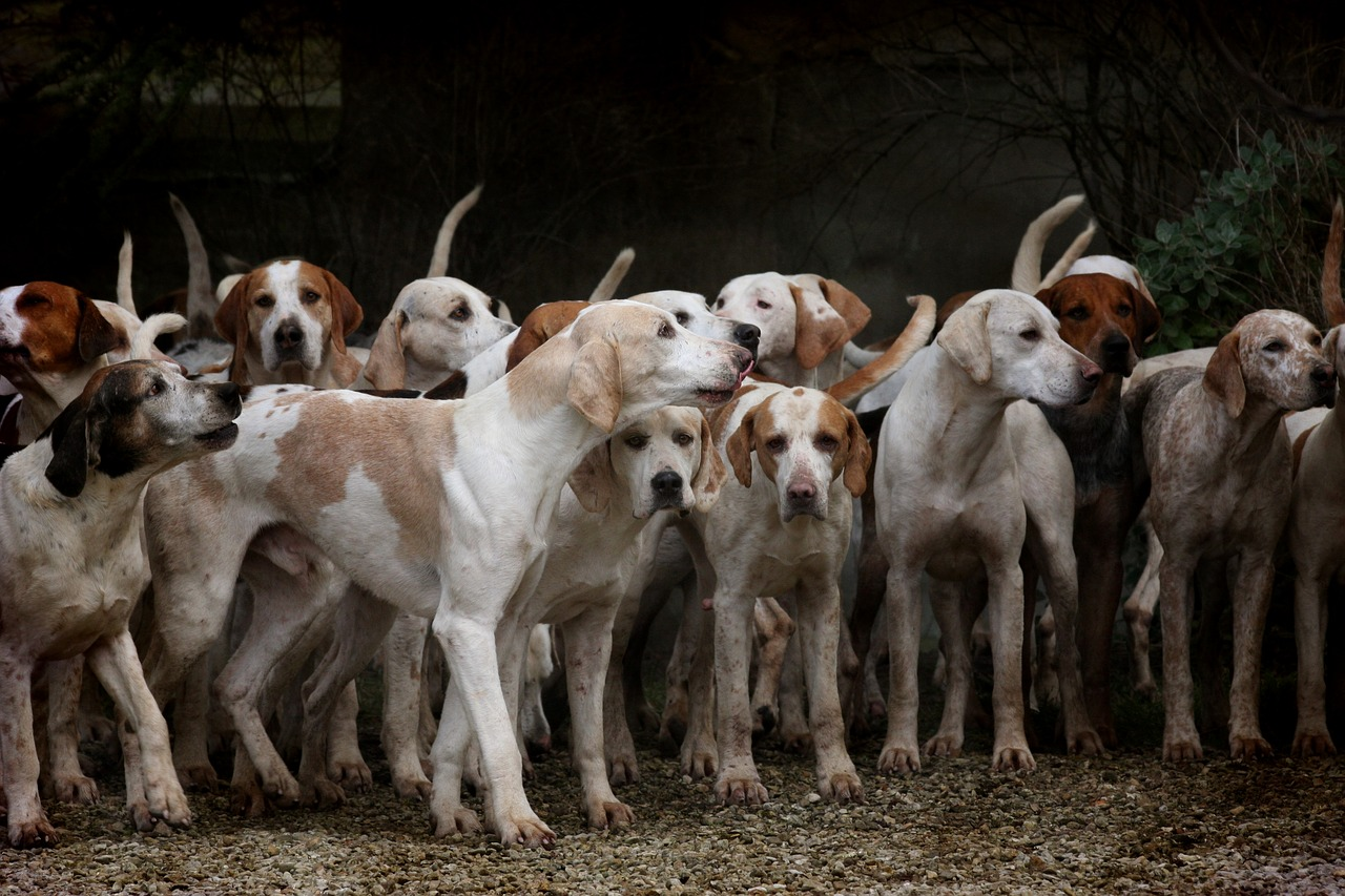 dog herd canine free photo