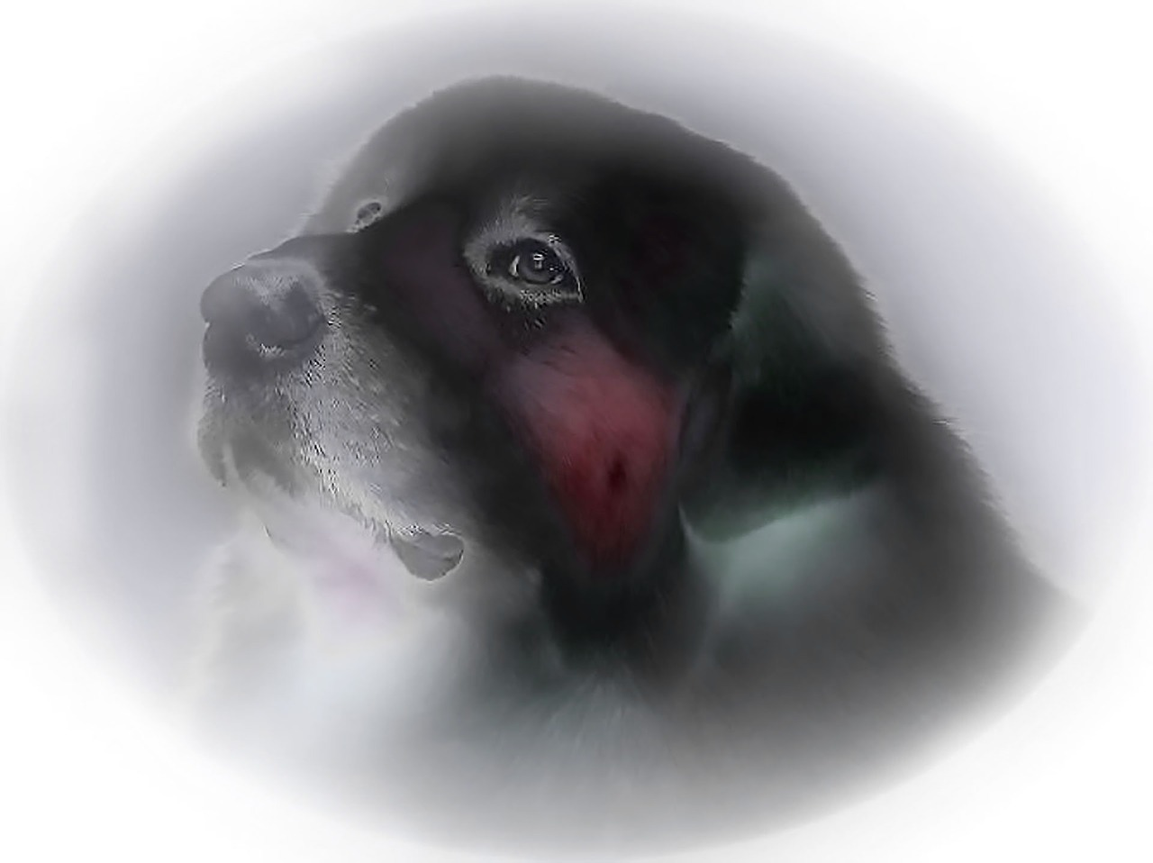 dog drawing dream free picture