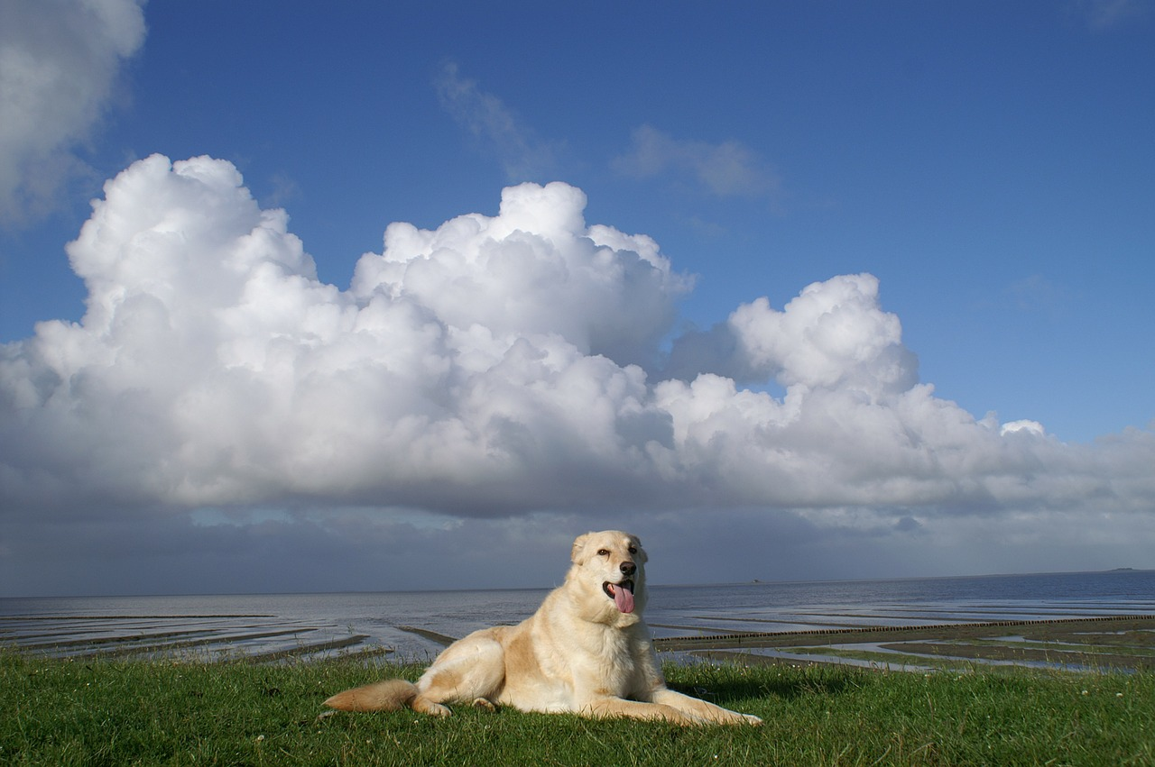 dog north sea dike free photo