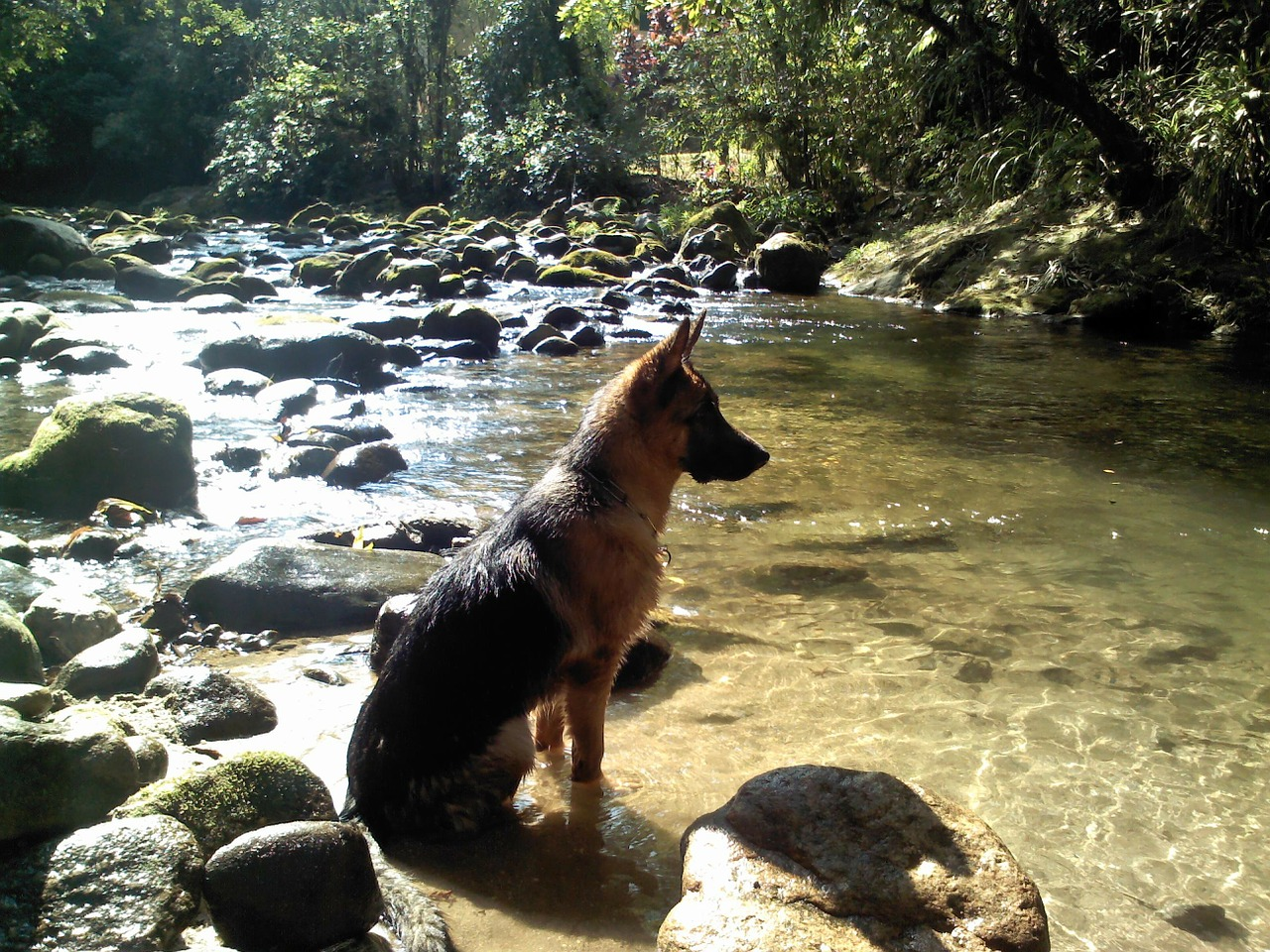 dog water rio free photo