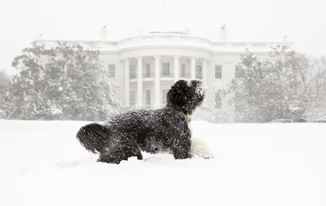 dog snow white house free photo