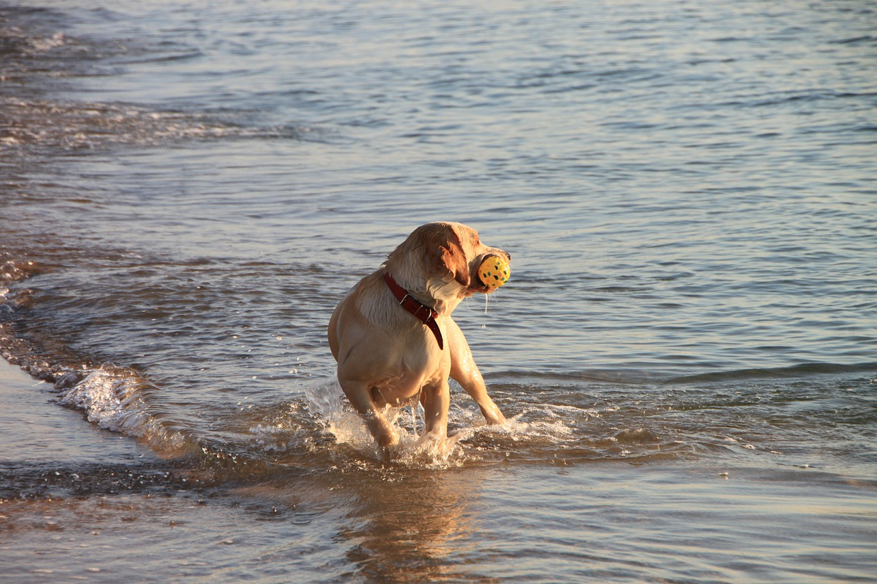 dog play running free photo