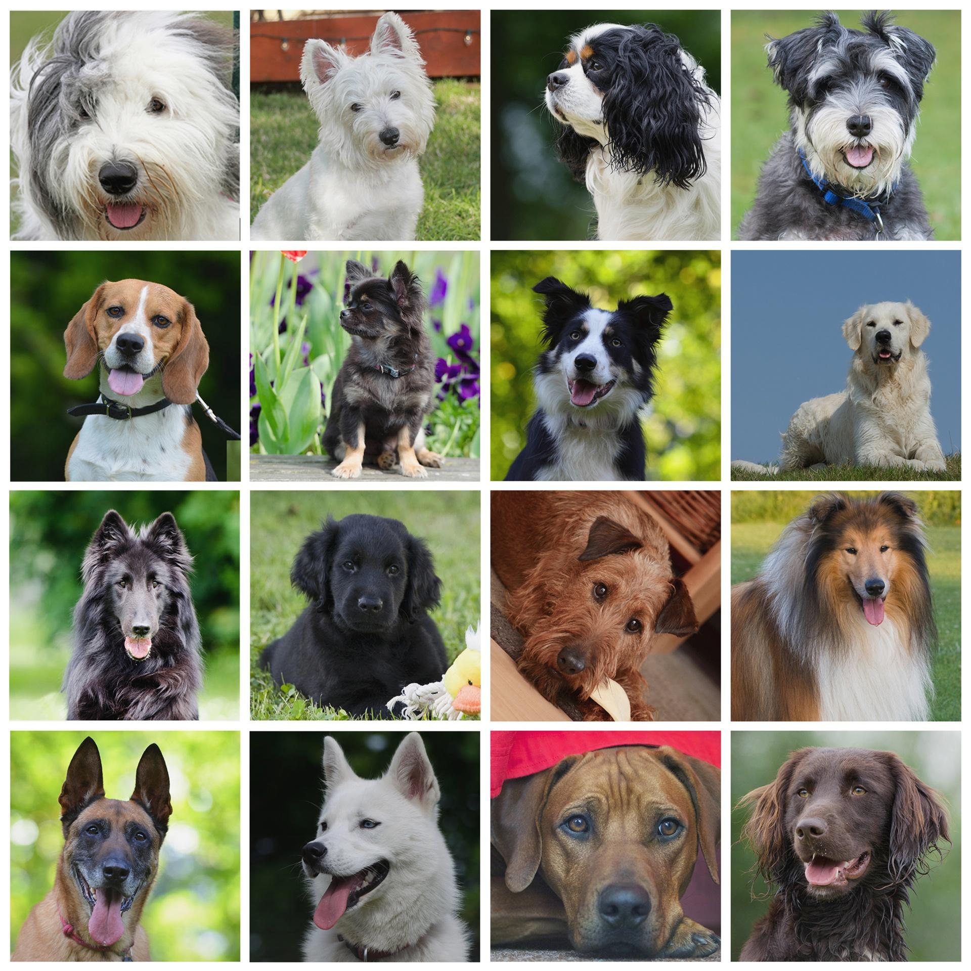 меня больно все породистые собаки с картинками присваивает каждой ячейке