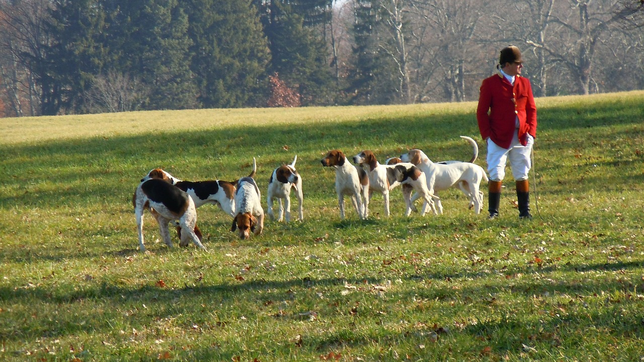 dogs hunt red jacket free photo
